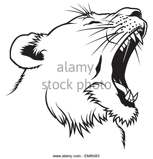 520x540 Lioness Cut Out Stock Images Amp Pictures