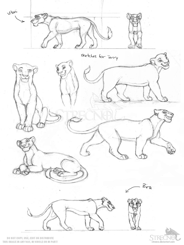 775x1031 Lioness Sketches By Strecno