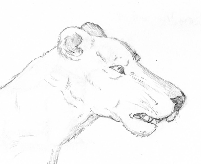 779x635 Lioness By Nutzi66