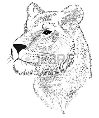 375x450 Vector Face Of A Lioness Royalty Free Cliparts, Vectors, And Stock