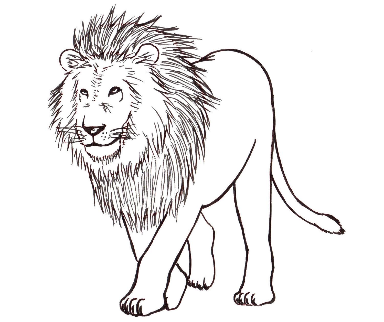 1500x1258 Adult How Do You Draw A Lion How Do You Draw A Lion's Head. How Do