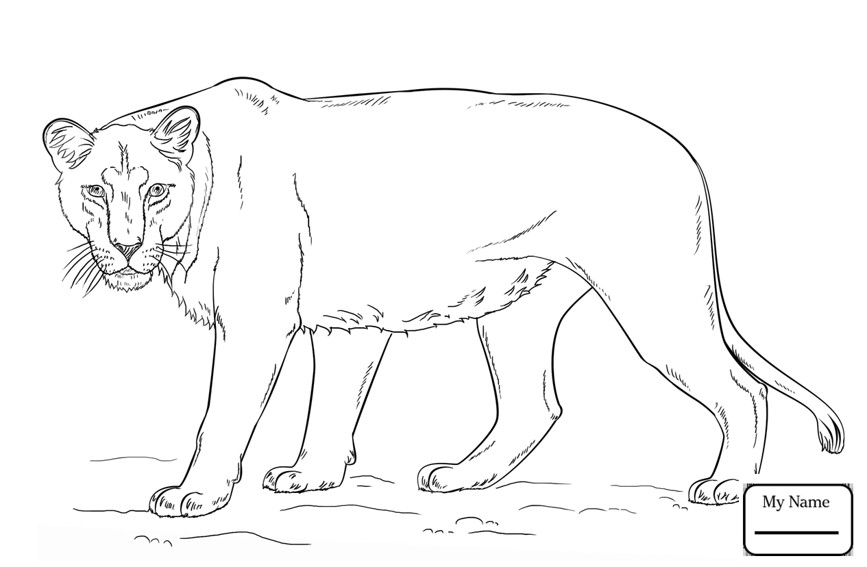 1265x828 Lions