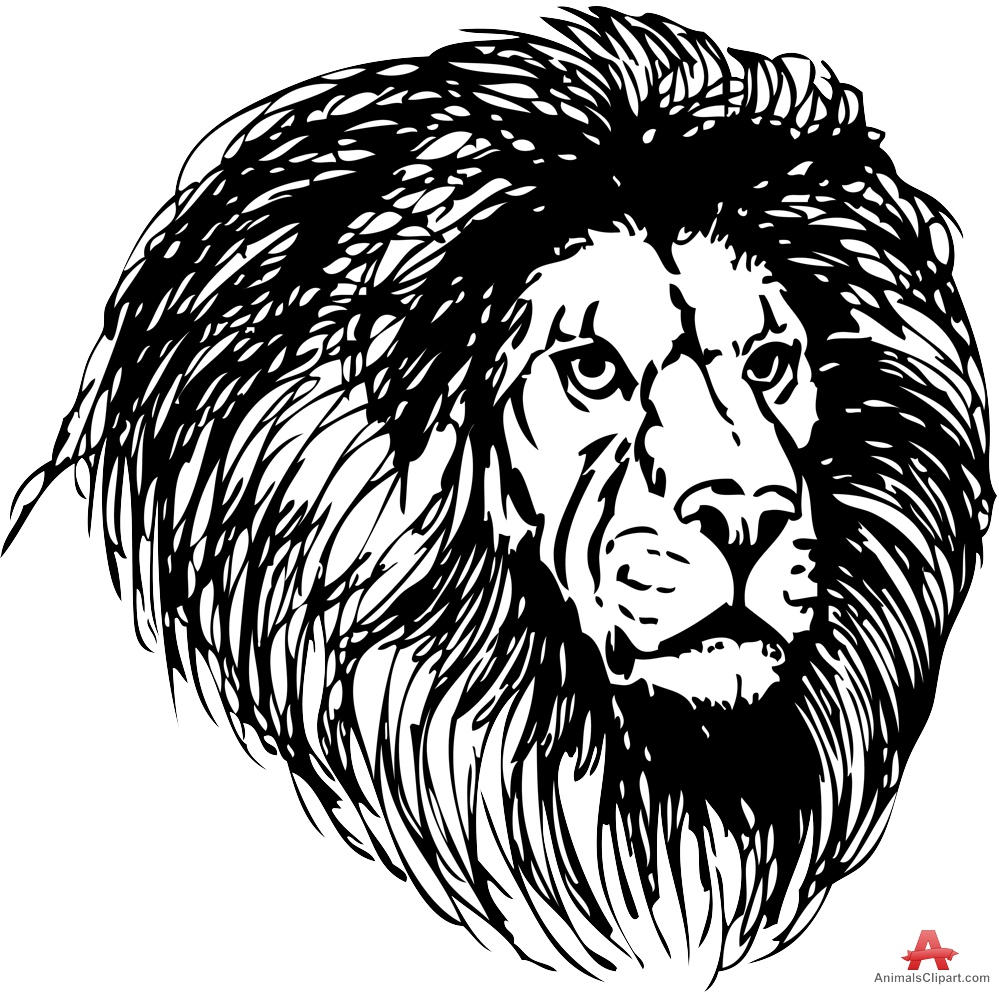 Lions Head Drawing