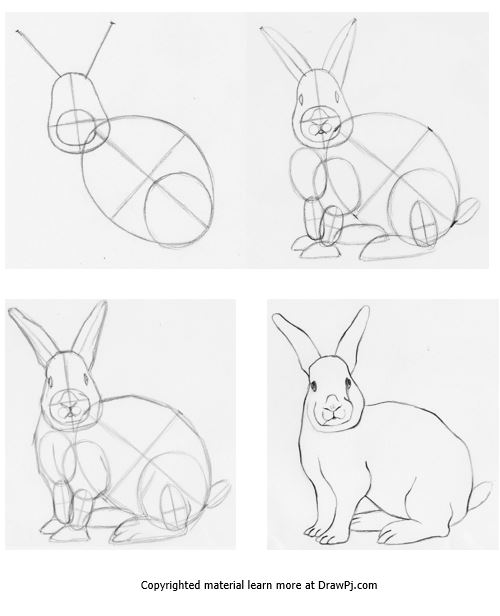 500x616 How to draw a rabbit using construction drawing step by step