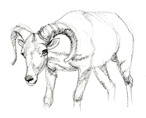 500x405 Drawing From Live Animals Susan Fox
