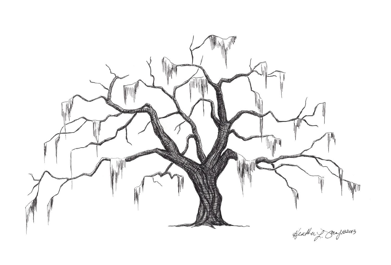 1500x1015 Southern Live Oak Drawing
