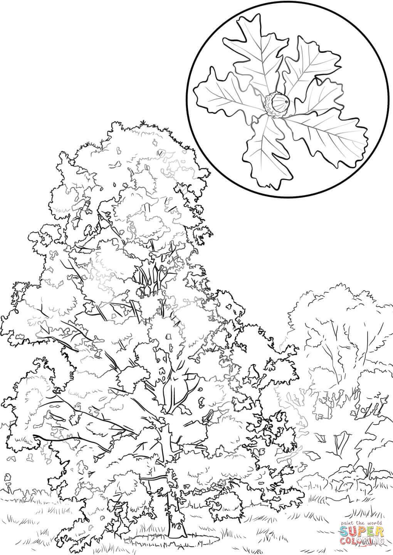 1020x1440 Bur Oak Coloring Page Free Printable Coloring Pages