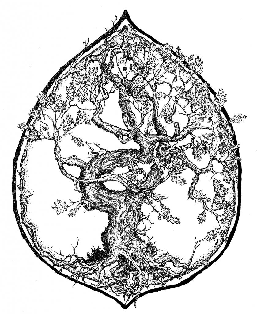 839x1024 Drawings Of Oak Trees Bare Oak Tree Drawings Related Keywords Amp