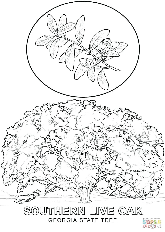 1020x1440 Printable Printable Tree Drawings