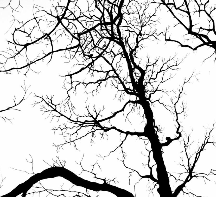 830x757 Oak Tree Silhouette