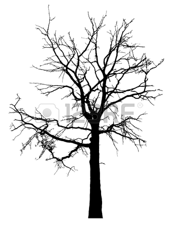 354x450 94 Live Oak Tree Silhouette Stock Vector Illustration And Royalty