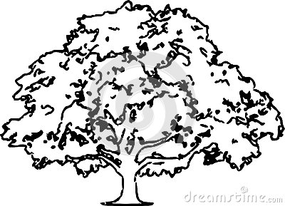 400x289 Pictures Oak Tree Line Drawing,