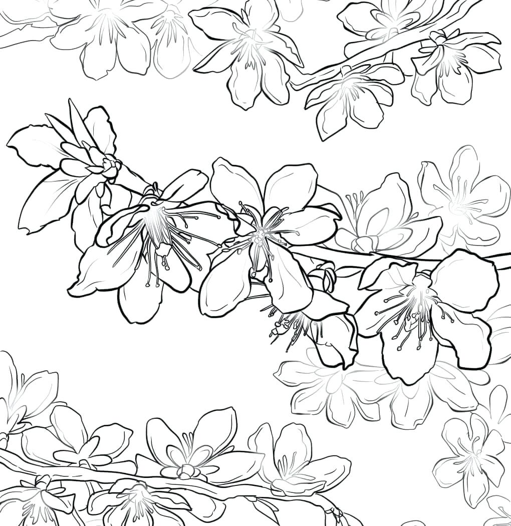 1020x1050 Coloring Oak Tree Coloring Page Maple Live. Oak Tree Coloring Page
