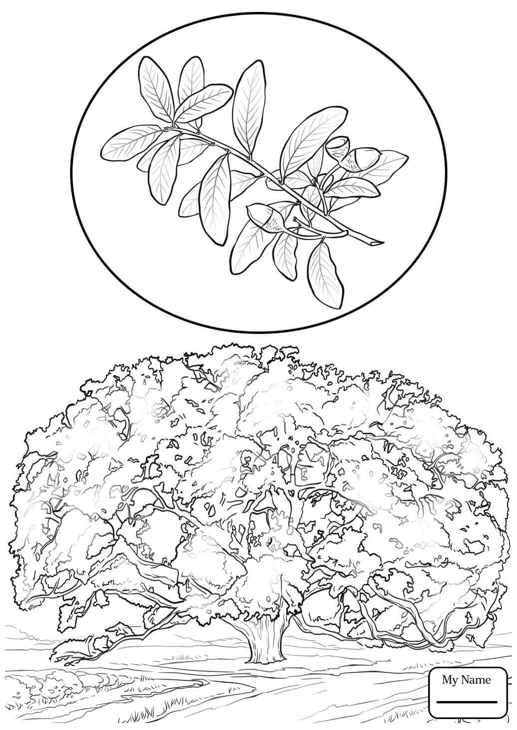 1040x1469 Coloring Pages For Kids Trees Leaves Oak Tree Outline