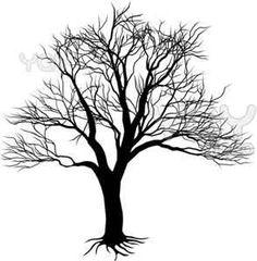 236x240 Southern Live Oak Drawing