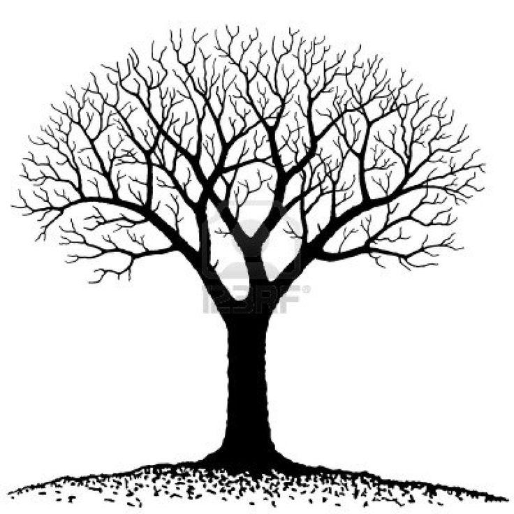 736x736 Bare Oak Tree Clipart