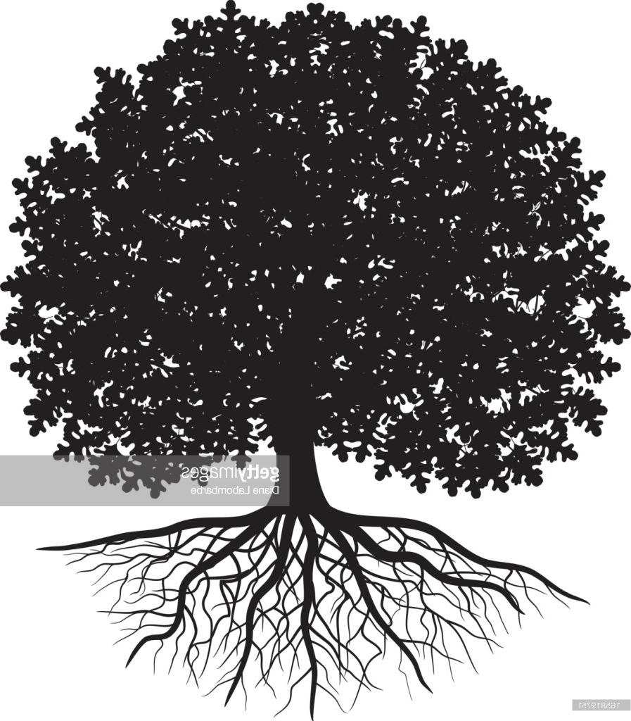897x1024 Best Black Silhouette Of Oak Tree With Leaves And Visible Roots