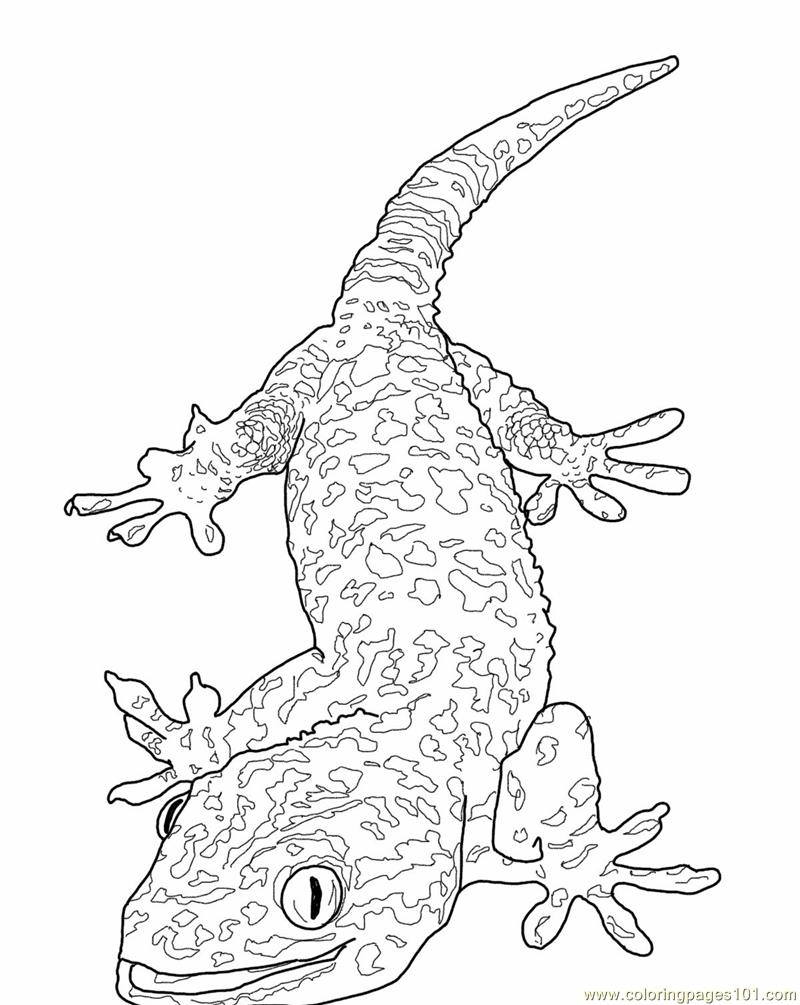 800x1005 Happy Lizard Coloring Pages
