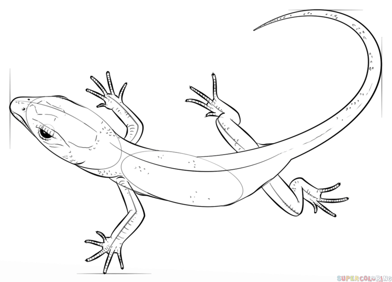 799x575 How To Draw A Realistic Lizard Step By Step Drawing Tutorials