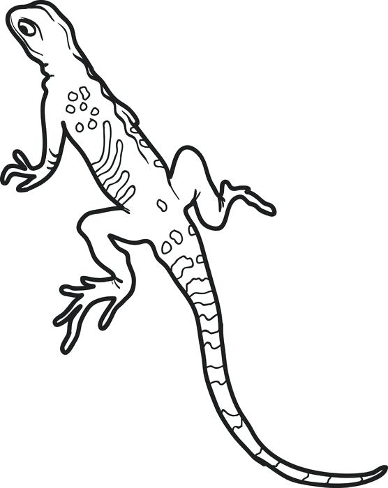 556x700 Newt Coloring Pages Printable Lizard Coloring Page For Kids