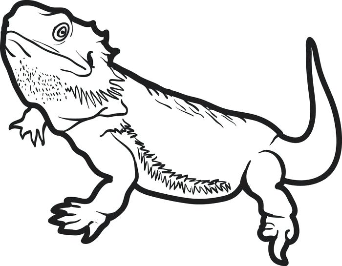 700x545 Reptile Coloring Page Reptile Coloring Pages With Printable Lizard