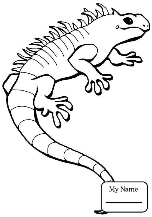 515x734 Reptiles Coloring Pages Green Iguana Reptiles Coloring Pages