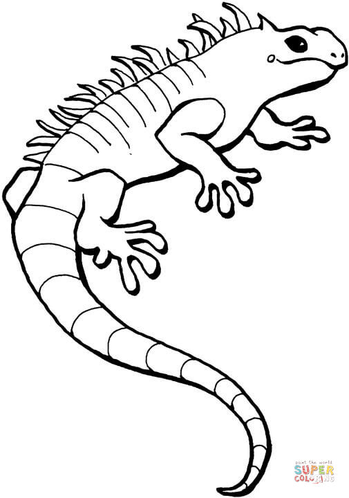 505x720 Iguana Coloring Page Free Printable Coloring Pages