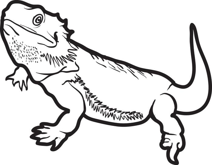700x545 Lizard Outline Coloring Page Lizard Outline Drawing