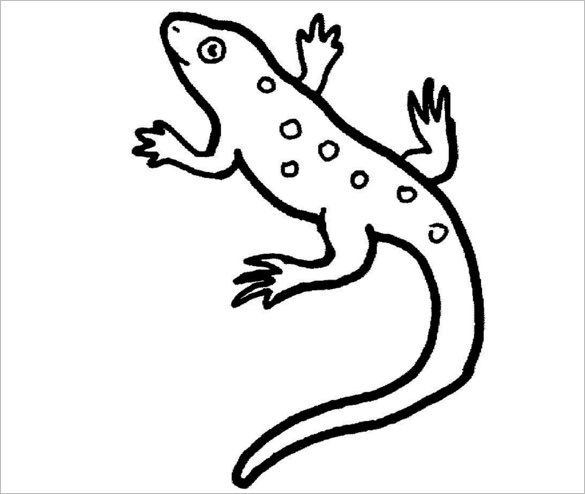 Lizard Drawing Pictures