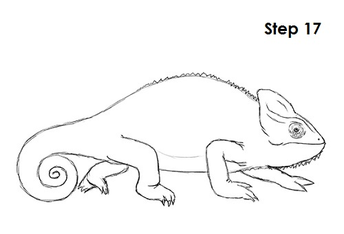 500x340 How To Draw A Chameleon