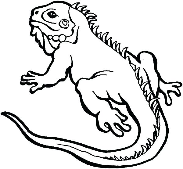 600x554 Lizard Coloring Page Drawing Lizard Coloring Pages Spiderman