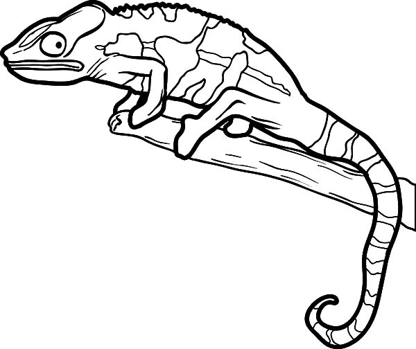 600x504 Download Online Coloring Pages For Free