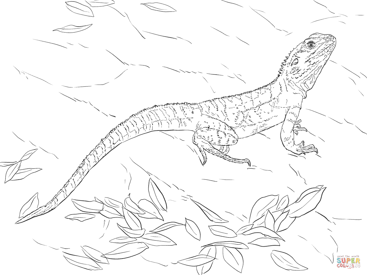 1200x900 Drawn Water Dragon Lizard