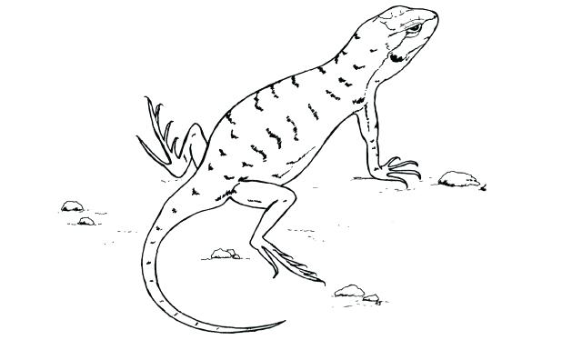 618x374 A Line Drawing Of Lizard Astounding Desert Animals Coloring Pages