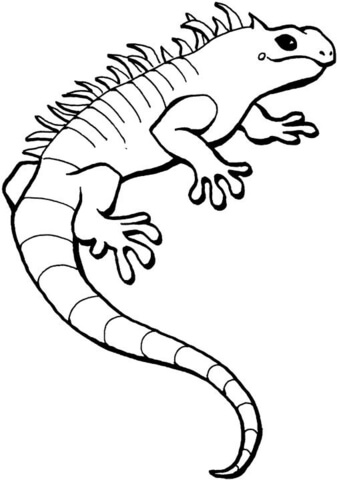 337x480 Iguana Coloring Page Free Printable Coloring Pages