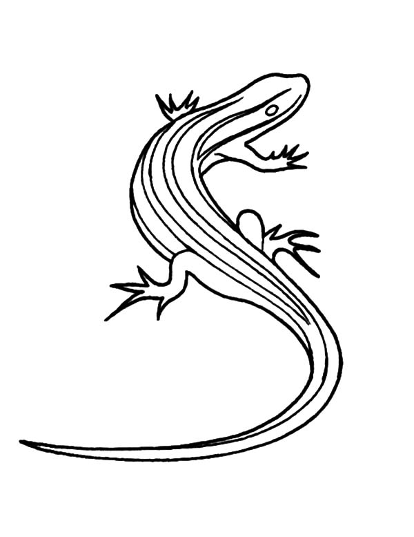 600x777 Picture Of Lizard Coloring Pages Picture Of Lizard Coloring Pages