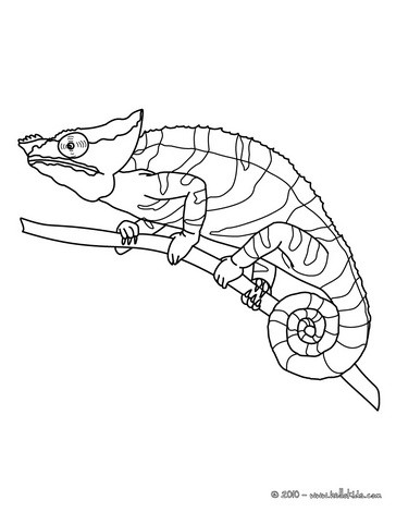 364x470 Chameleon Printable Coloring Pages