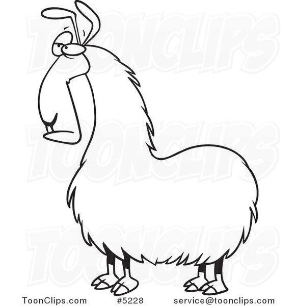 581x600 Cartoon Black And White Line Drawing Of A Bored Llama