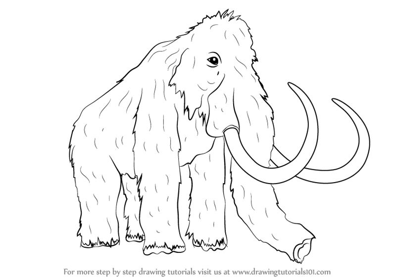 800x566 Learn How To Draw A Woolly Mammoth (Other Animals) Step By Step