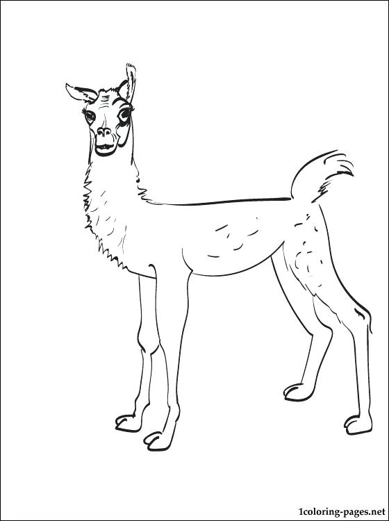 560x750 Llama Animal Coloring Pages Llama Coloring Page Coloring Pages