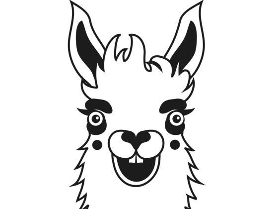 560x420 Alpaca Or Lama Playbuzz