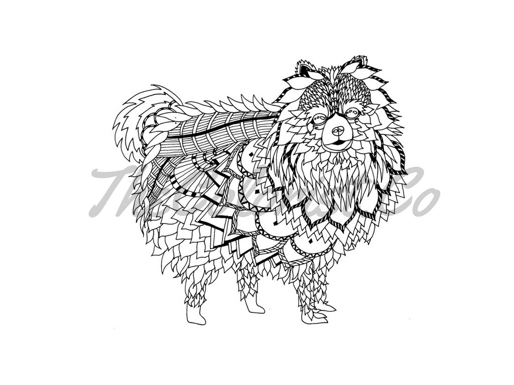 1024x768 Pomeranian Dog Coloring Page Amp Line Art Print