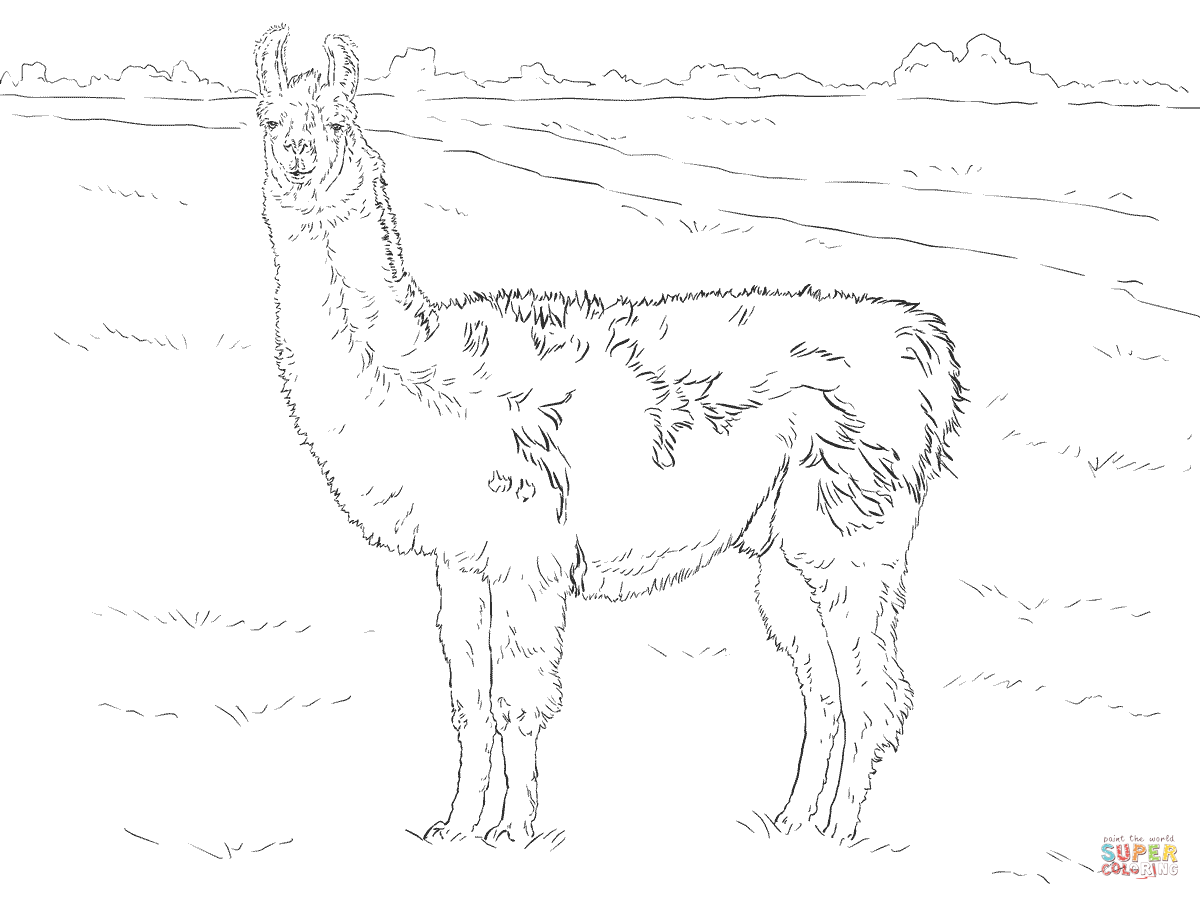 Line Drawing Giraffe : Llama line drawing at getdrawings.com free for personal use