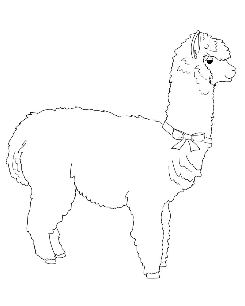 Llama Line Drawing At Getdrawingscom Free For Personal Use Llama