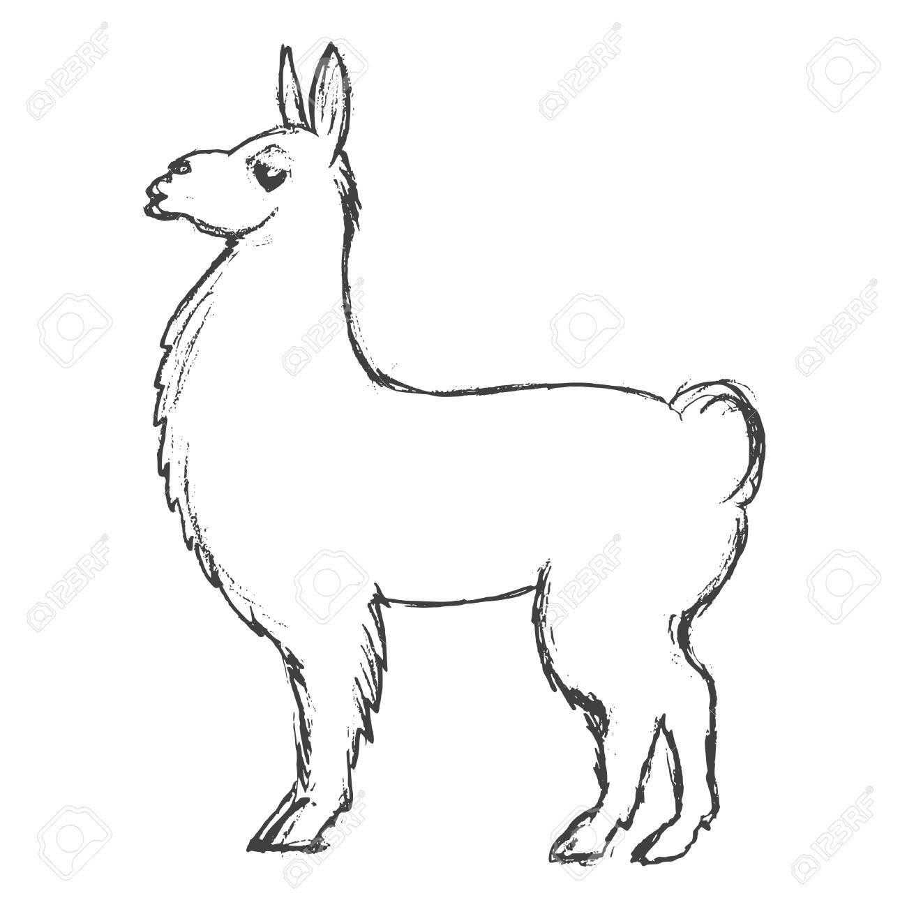 1300x1300 Vector, Sketch, Hand Drawn Illustration Of Lama Royalty Free