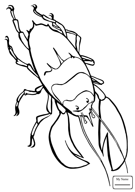 1081x1530 Lobsters