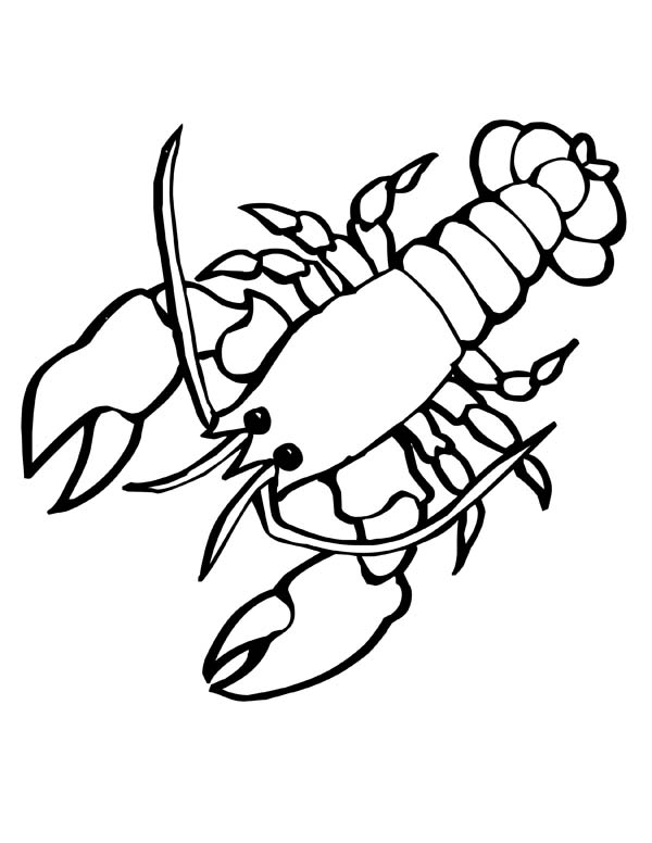 600x776 Giant Sea Lobster With Big Clasp Sea Animals Coloring Page