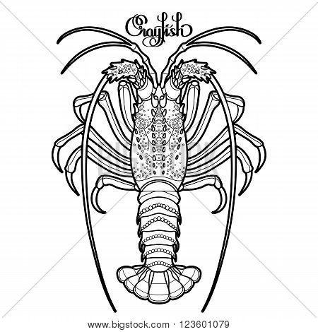 450x470 Graphic Vector Crayfish Drawn Line Vector Amp Photo Bigstock