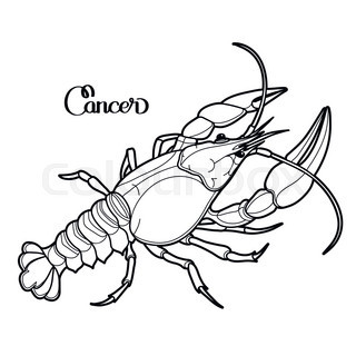 320x320 Graphic Vector Lobster Drawn In Line Art Style. Sea And Ocean