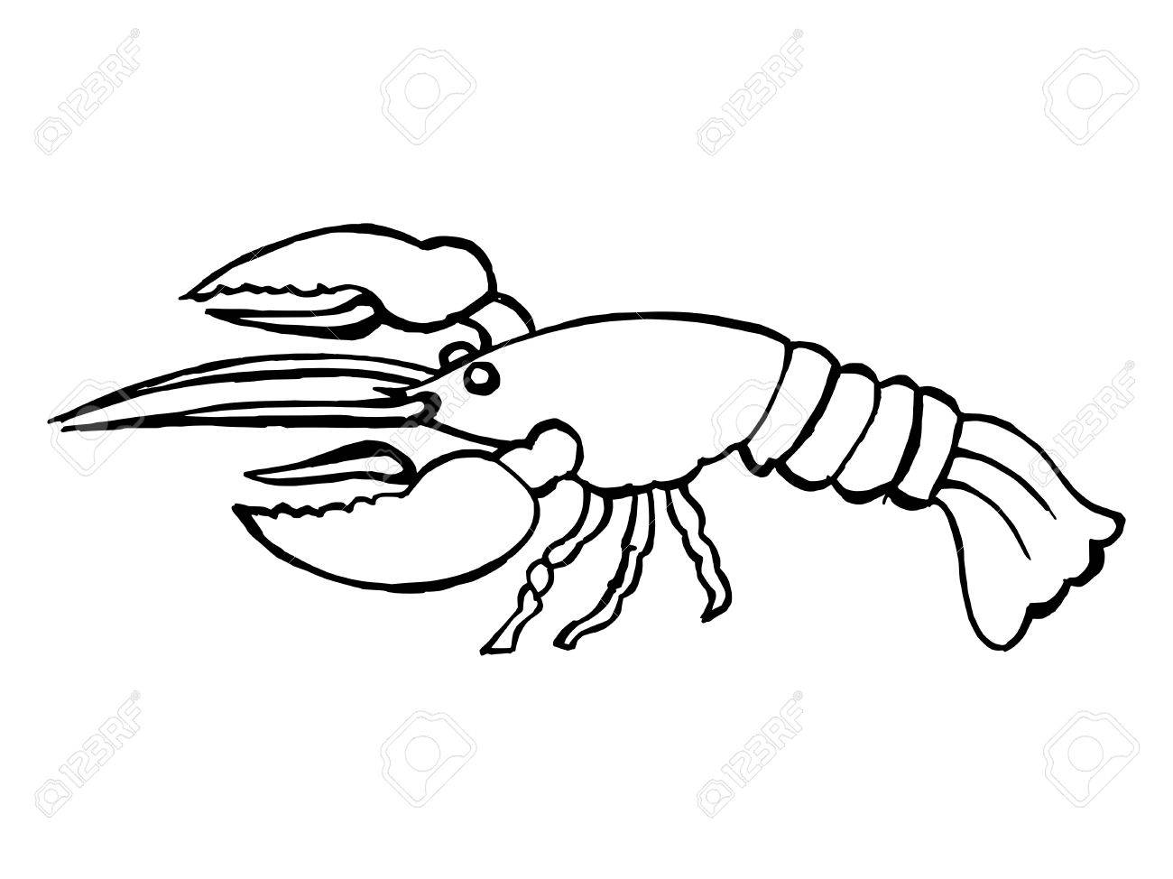 1300x974 Hand Drawn, Vector Illustration Of A Lobster Royalty Free Cliparts